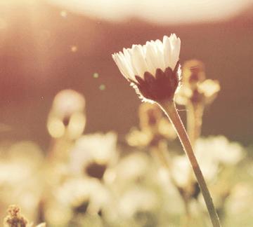 Blossom in light