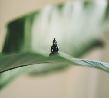 Buddha on leaf